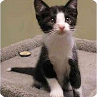Adopt A Pet :: Jasper - Portland, OR