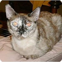 Adopt A Pet :: Valentina - lake elsinore, CA