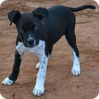Adopt A Pet :: Hopper - Athens, GA
