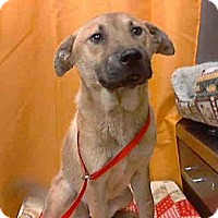 Adopt A Pet :: Silver NEEDS FOSTER ASAP - Sacramento, CA