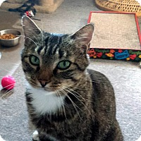 Adopt A Pet :: Jerry (JT) - Little Falls, NJ