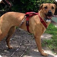 Adopt A Pet :: Ruby Sue - Ft. Lauderdale, FL