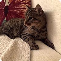 Adopt A Pet :: Plutoon - Addison, IL