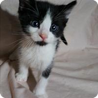 Adopt A Pet :: Cooper - Pasadena, CA