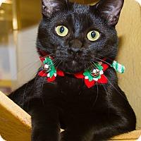 Adopt A Pet :: Harper - Irvine, CA