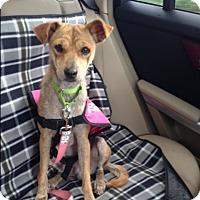 Adopt A Pet :: Lola - Jupiter, FL
