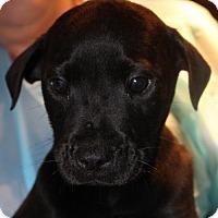 Adopt A Pet :: Enzo - Royal Palm Beach, FL
