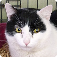 Adopt A Pet :: Tony - Washougal, WA