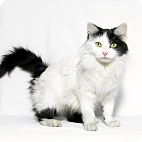 Adopt A Pet :: Minnie - Lufkin, TX