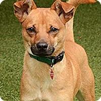 Adopt A Pet :: Lenny - Novato, CA
