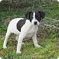 Adopt A Pet :: AIMEE - Bedminster, NJ