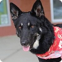 Adopt A Pet :: Kora - Greensboro, NC