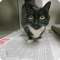 Adopt A Pet :: Ashley - Philadelphia, PA