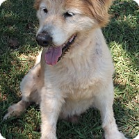 Collie Mix Dog for adoption in Salisbury, North Carolina - Lucky