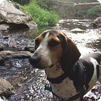 Hound (Unknown Type) Mix Dog for adoption in Unionville, Pennsylvania - Josh