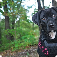 Adopt A Pet :: Nikkie - New Castle, PA