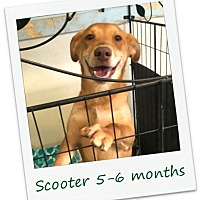 Adopt A Pet :: Scooter - PENDING ADOPTION - Hinesburg, VT