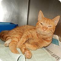 Adopt A Pet :: Pumpkin (Petsmart New Bern) - Newport, NC