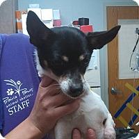 Adopt A Pet :: Sassy - Ottawa, KS