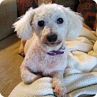 Adopt A Pet :: Buddy - Alexandria, KY