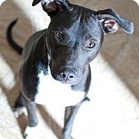 Adopt A Pet :: Jackie (ETAA) - Allentown, PA