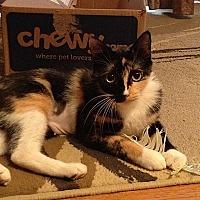 Adopt A Pet :: Lailoni - Tampa, FL