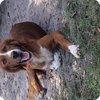 Adopt A Pet :: Dale - New Smyrna beach, FL