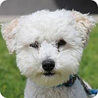 Adopt A Pet :: Palmer - La Costa, CA