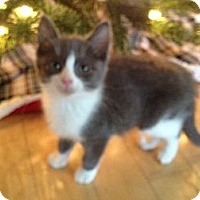 Adopt A Pet :: Tulip - East Hanover, NJ