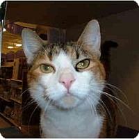 Adopt A Pet :: IZZY - No.Charleston, SC