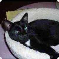 Adopt A Pet :: Rounder - Hamburg, NY