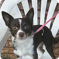 Adopt A Pet :: Danielle