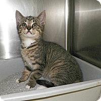 Adopt A Pet :: Alvery - Dover, OH