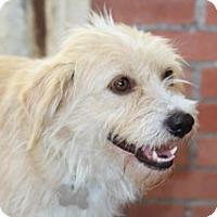 Adopt A Pet :: Carmella - Norwalk, CT