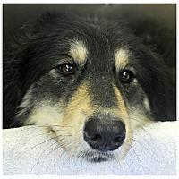 Adopt A Pet :: Jolene - Forked River, NJ