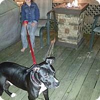 Adopt A Pet :: Coffee - North Brunswick, NJ