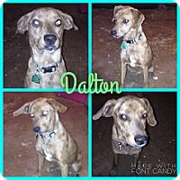 Adopt A Pet :: Dalton in ct - East Hartford, CT