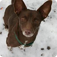 Adopt A Pet :: Pennypalooza - Wheatland, WY
