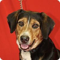 Adopt A Pet :: Champ - Jackson, MI