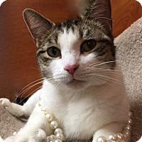 Adopt A Pet :: Big Momma - Long Beach, NY