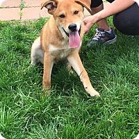 Adopt A Pet :: Katch (fostered in NC) - Cranston, RI