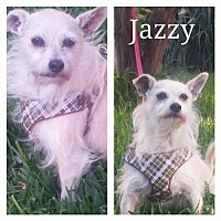 Adopt A Pet :: Jazzy - Fort Worth, TX