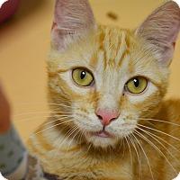 Adopt A Pet :: Tigger - Springfield, IL