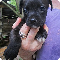 Adopt A Pet :: FRITZ - Lincolndale, NY