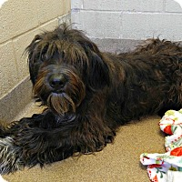 Adopt A Pet :: 1-11 - Triadelphia, WV