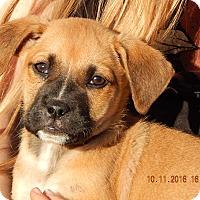 Adopt A Pet :: Whiskey (6 lb) Video! - Burlington, VT
