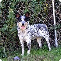 Adopt A Pet :: Jonesy - Broadway, NJ