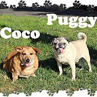 Adopt A Pet :: Coco & Puggy - Fallston, MD