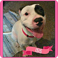 Adopt A Pet :: Isis - Des Moines, IA