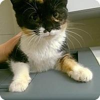 Adopt A Pet :: Valentine - Camden, DE